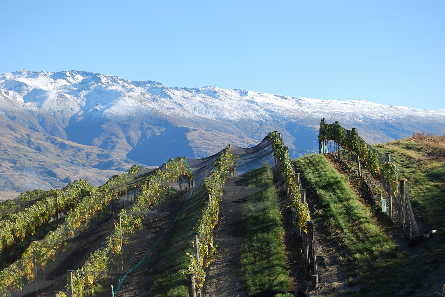 Misha's Vineyard, Central Otago, NZ